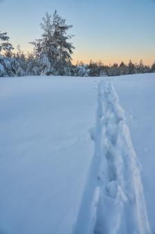 Trilha na neve na floresta de inverno. copie o espaço.