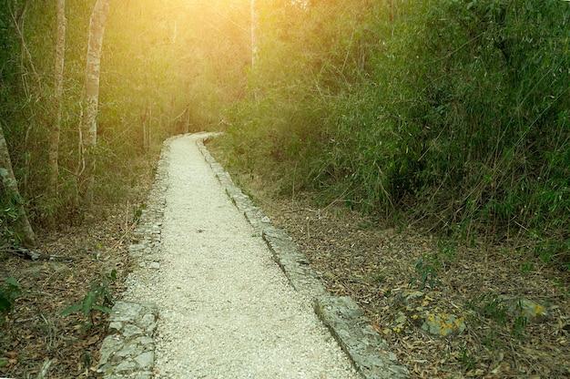 Trilha para caminhada em uma selva tropical