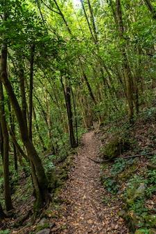 Trilha para caminhada no parque natural los tinos na costa nordeste da ilha de la palma