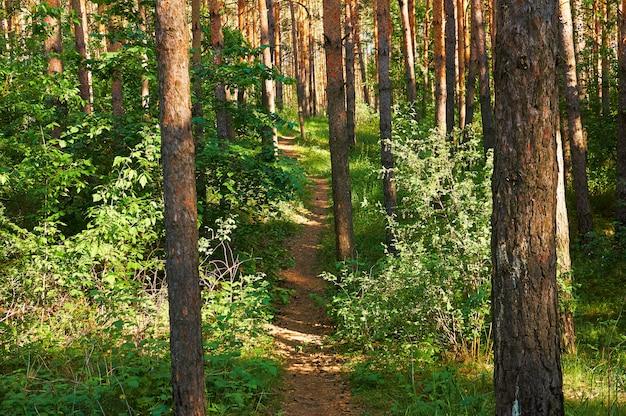 Trilha para pessoas na floresta verde.
