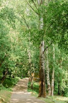 Trilha pela floresta de primavera. caminho da pista de passagem com árvores verdes na floresta. beco bonito, estrada no parque. caminho através da floresta de verão. moldura vertical