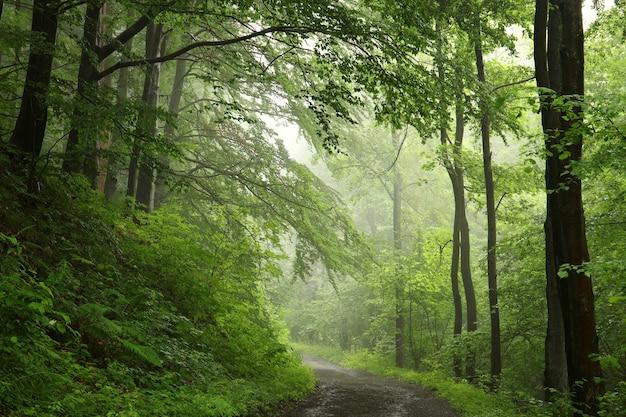 Trilha pela floresta estacional decidual de primavera com tempo nevoento e chuvoso