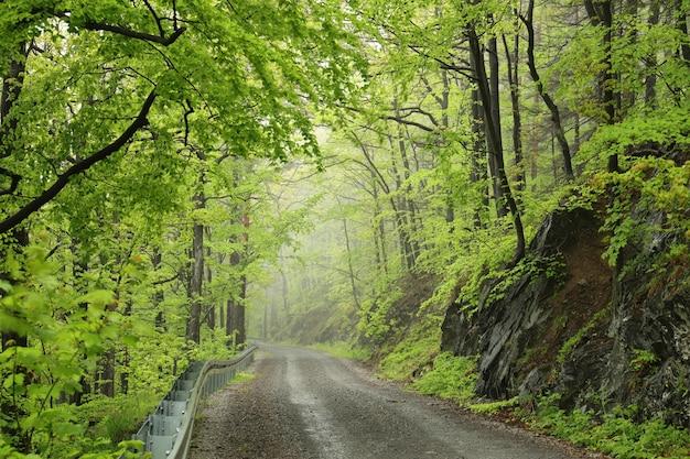 Trilha pela floresta estacional decidual de primavera com tempo nublado e chuvoso