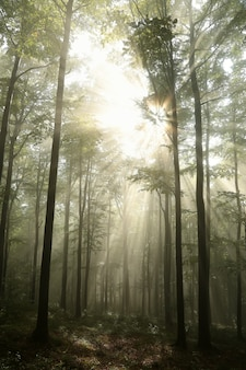 Trilha por uma floresta de coníferas durante o nascer do sol com tempo nublado