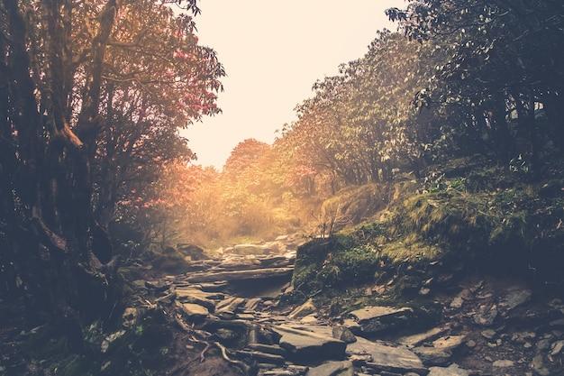 Trilha por uma misteriosa floresta escura na neblina, manhã de outono na atmosfera mágica do himalaia nepal