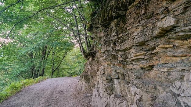 Trilha turística em bosque de buxo de teixo e parede rochosa na floresta, sochi