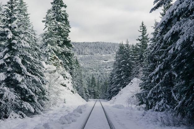 Trilhas de esqui em uma colina de neve íngreme na floresta
