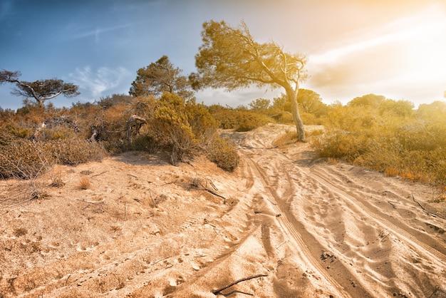 Trilhas de veículos em dunas de areia com vegetação e clarão solar