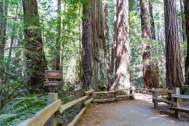 Trilhas para caminhadas por sequóias gigantes na floresta muir, perto de são francisco
