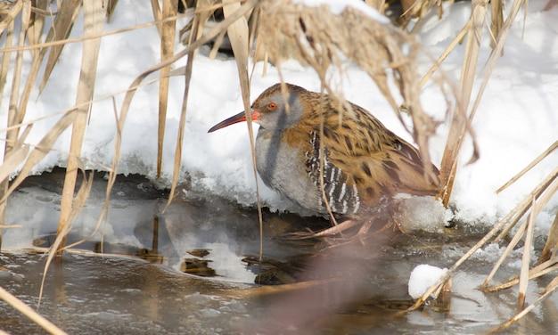 Trilho de água fica na água gelada no inverno