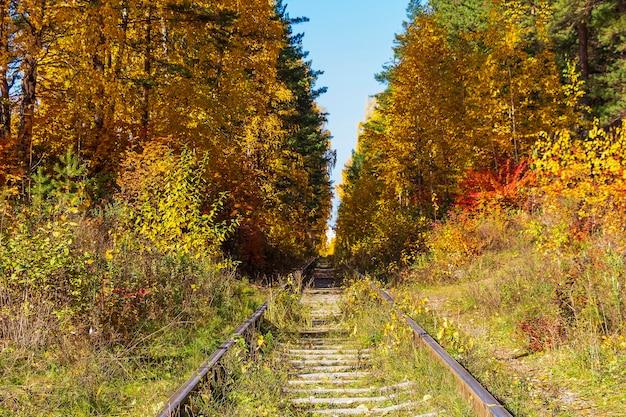 Trilhos abandonados na floresta de outono