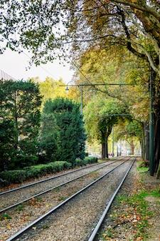 Trilhos de bonde em um belo parque verde com vegetação densa.