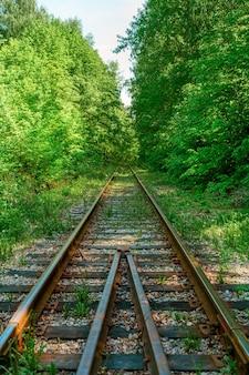 Trilhos de trem abandonados na floresta