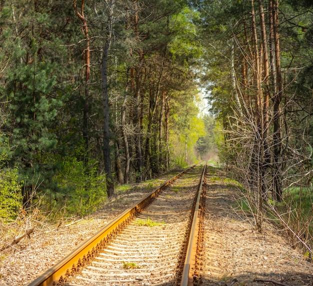 Trilhos de trem em uma floresta de pinheiros
