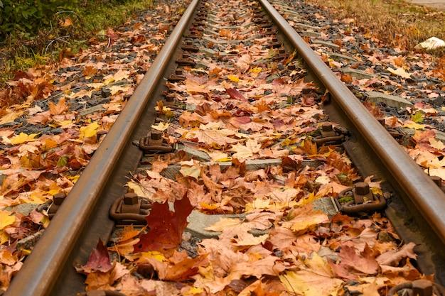 Trilhos de trem no outono