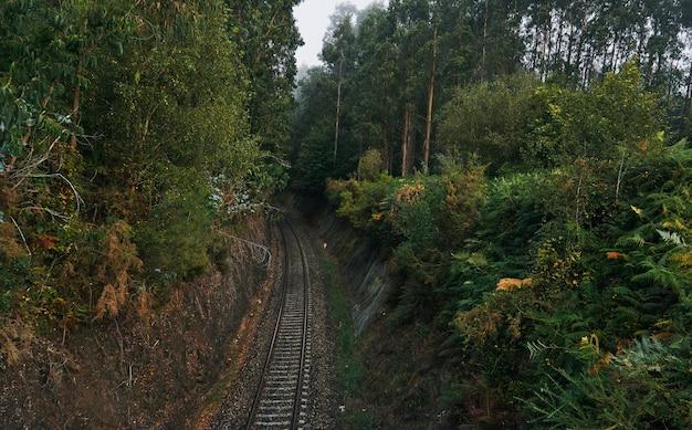 Trilhos de trem passando por uma floresta enevoada