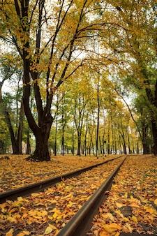 Trilhos no parque da cidade com árvores e folhas amarelas caídas de outono no chão