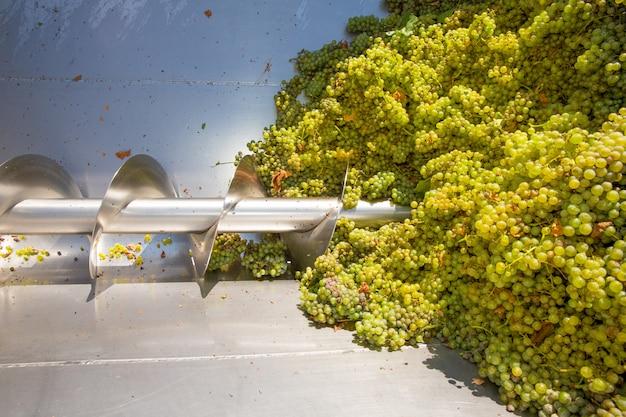 Triturador de saca-rolhas chardonnay destemmer na vinificação