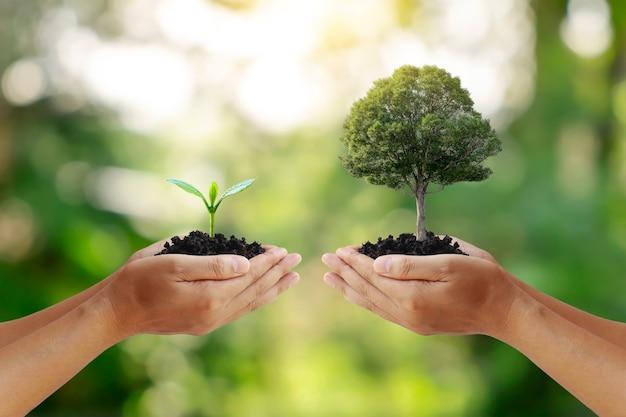 Troca a mão segurando uma pequena árvore com a mão grande árvore conceito de proteção ambiental