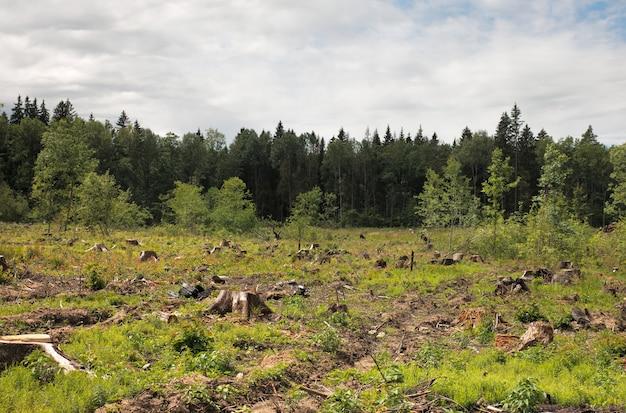 Tronco após desmatamento