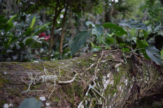 Tronco caido en el bosque Foto Premium