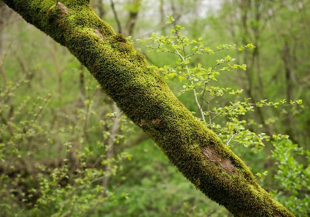 Tronco de árvore coberto de musgo verde