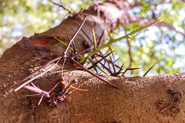 Tronco de árvore com espinhos para proteger contra animais nocivos.