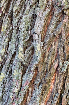 Tronco de árvore com fundo de textura de musgo