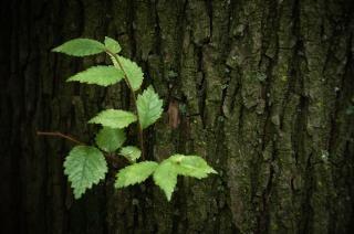 Tronco de árvore com planta