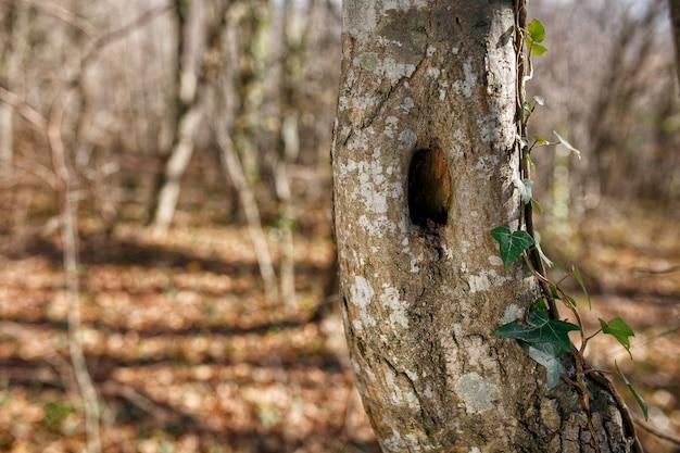 Tronco de árvore com um buraco, no parque