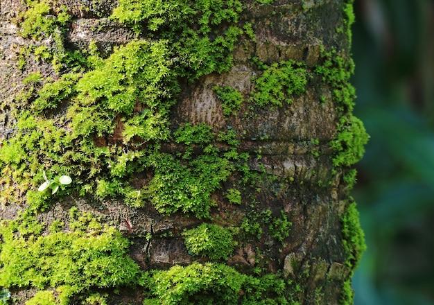 Tronco de árvore de coco com musgos verdes vibrantes, para fundo e textura de planta com foco seletivo