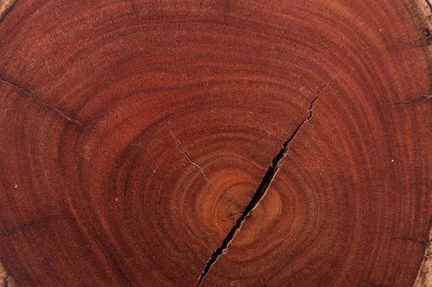 Tronco de árvore de textura de madeira