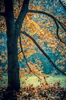 Tronco de árvore e galhos pretos com folhas de laranja de outono, com um filtro azul