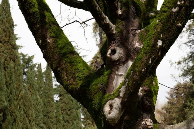 Tronco de árvore e musgo na floresta. um pequeno pássaro ao fundo, foco desfocado