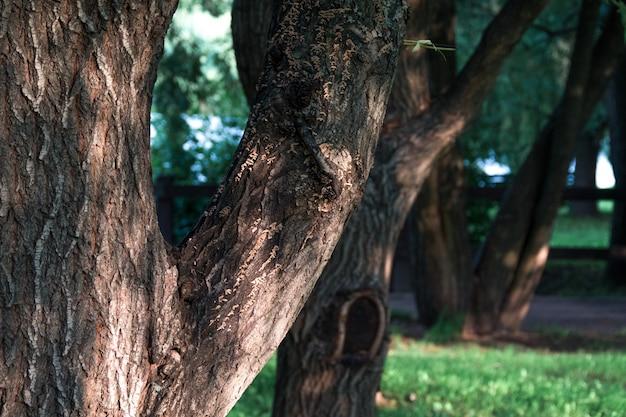 Tronco de árvore, gramado verde no parque da cidade sob a luz do sol