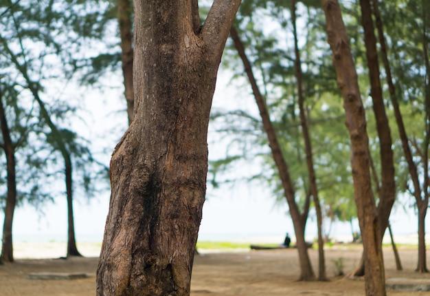 Tronco de árvore na praia.