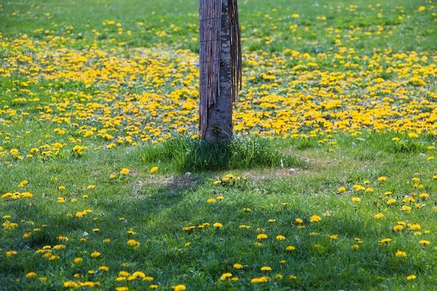 Tronco de árvore no campo verde