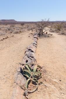 Tronco de árvore petrificado e mineralizado no parque nacional famoso de floresta petrified em khorixas, namíbia, áfrica. floresta de 280 milhões de anos, conceito de mudança climática
