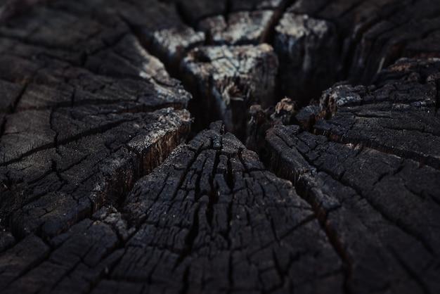 Tronco de árvore queimada