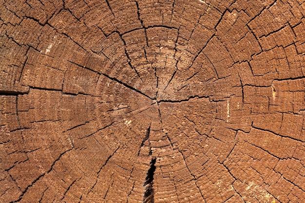 Tronco de árvore rachado na parede de uma casa de madeira
