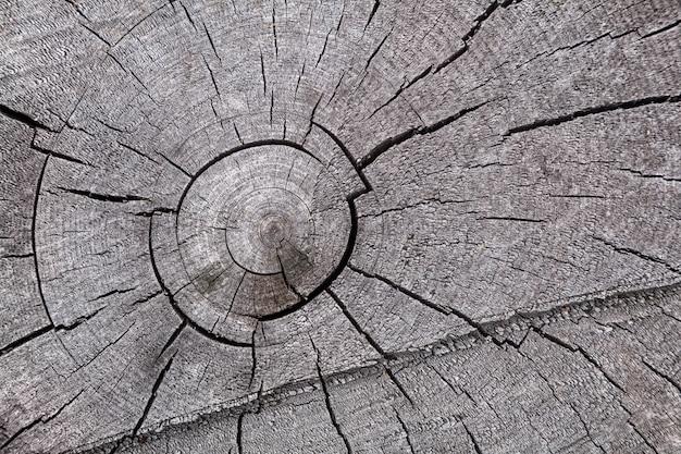 Tronco de árvore seca cinza close-up, galhos de árvore textura de fundo