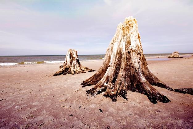 Tronco de árvores mortas no parque nacional de slowinski.