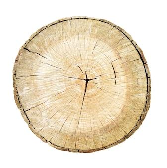 Tronco de corte de árvore isolado no fundo branco. toco com texturas de anéis de madeira