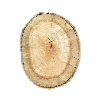 Tronco de corte de árvore isolado. textura de toras com texturas de anéis circulares