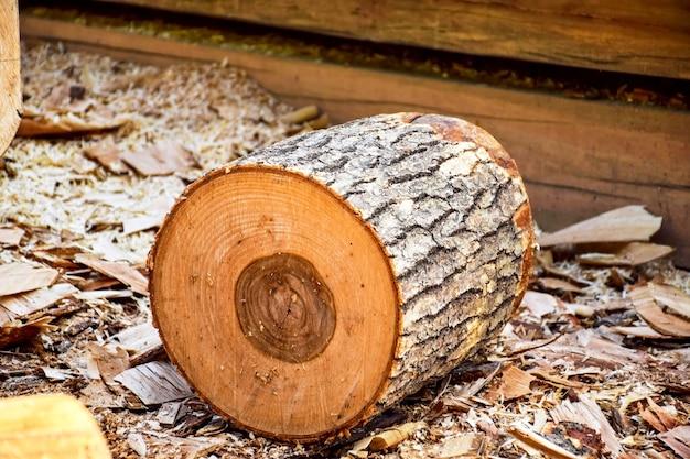 Tronco de madeira em serragem