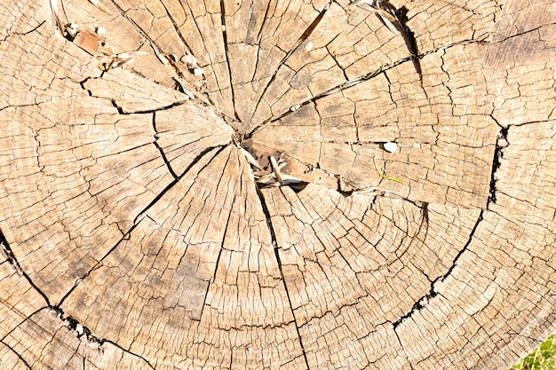 Tronco de madeira velho
