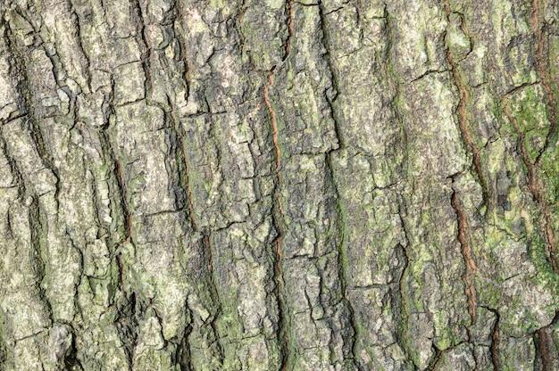 Tronco de pele closeup de árvore com textura de musgo de água