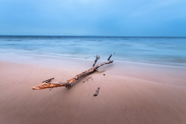Tronco deitado na costa / amanhecer na costa tons de azul no início da primavera