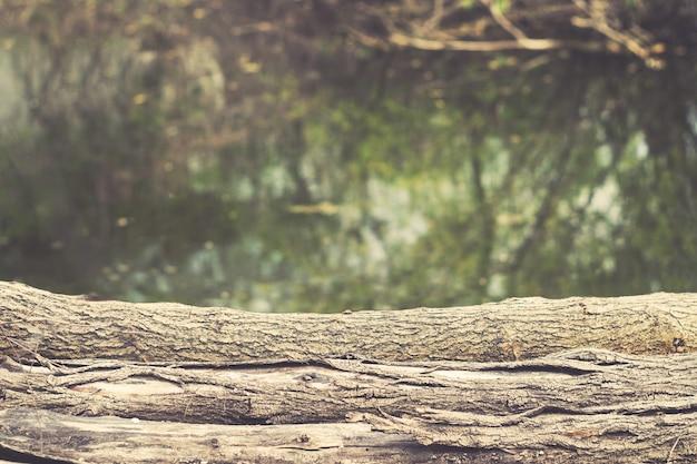 Troncos antigos com casca no fundo do lago