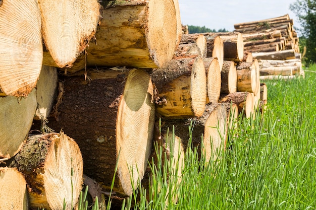 Troncos de árvore redondos